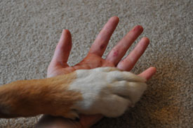 A berry-stained hand and dog paw.