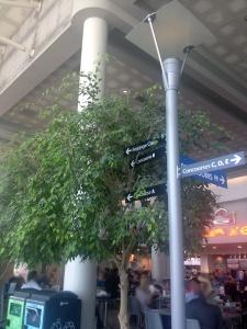 Inside Trees