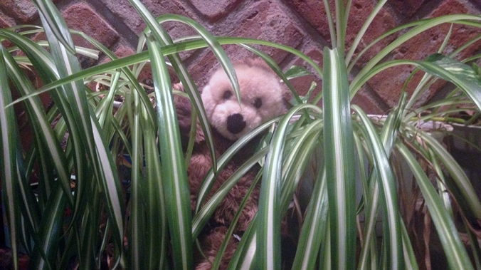 Toy groundhog in plants