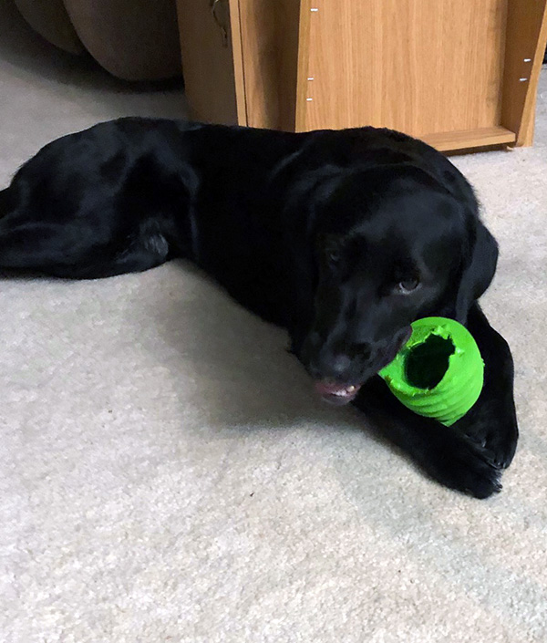 Dog chewing on toy.